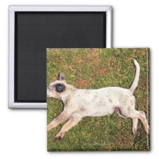 High angle of a dog lying in the grass sleeping. 2 inch square magnet