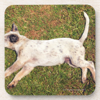 High angle of a dog lying in the grass sleeping. drink coaster
