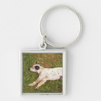 High angle of a dog lying in the grass sleeping. keychain