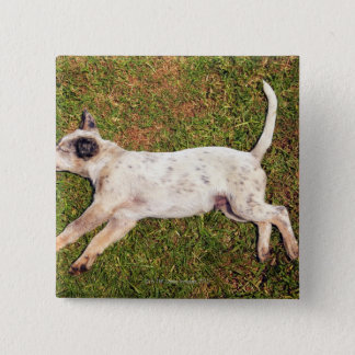 High angle of a dog lying in the grass sleeping. pinback button