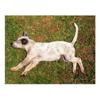 High angle of a dog lying in the grass sleeping. postcard