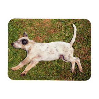 High angle of a dog lying in the grass sleeping. rectangular photo magnet