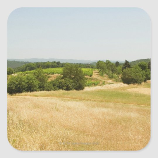 High angle view of a field, Siena Province, 2 Square Sticker