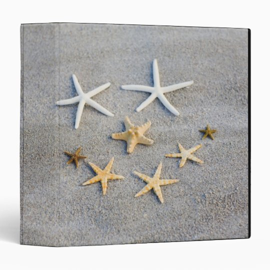 High angle view of a starfish on the beach binder