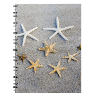 High angle view of a starfish on the beach notebook