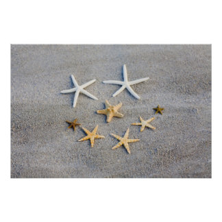 High angle view of a starfish on the beach poster