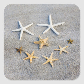 High angle view of a starfish on the beach square stickers