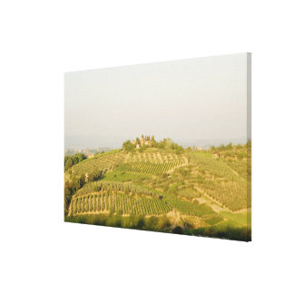 High angle view of a vineyard, Siena Province, Canvas Print