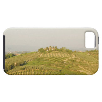 High angle view of a vineyard, Siena Province, iPhone SE/5/5s Case