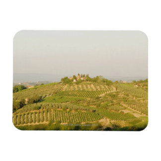 High angle view of a vineyard, Siena Province, Magnet
