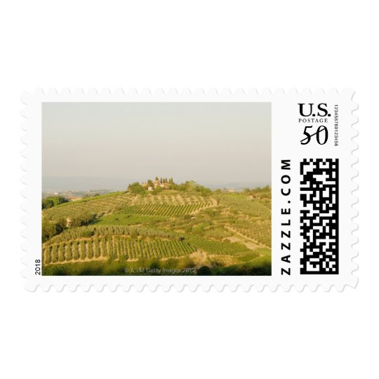 High angle view of a vineyard, Siena Province, Postage