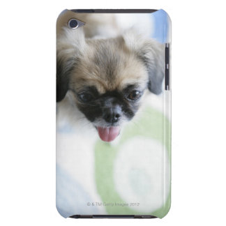 High angle view of an Eskimo Dog iPod Touch Cover