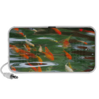 High angle view of koi crap fish in a pond laptop speakers