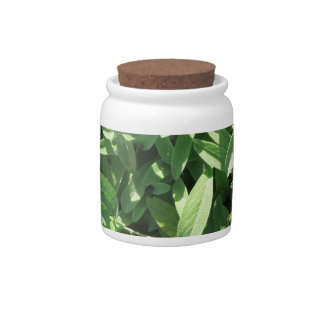 High angle view of sage plant in the garden candy jar