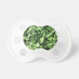 High angle view of sage plant in the garden pacifier