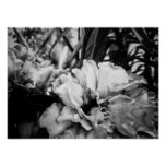 High Contrast Flowers Poster