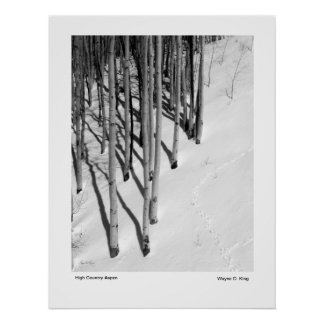 High Country Aspen Poster