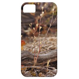 High Desert Shroom iPhone SE/5/5s Case