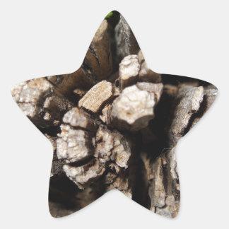 High-Detail Log Photograph Star Sticker