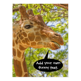 High Giraffe Postcard