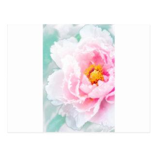 High Key Pink Peony Flower Postcard
