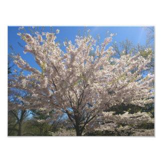 High Park Sakura Photo Print