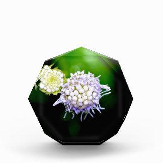 High Quality Floral Photo Acrylic Award