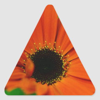 High Quality Floral Photo Sticker