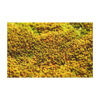 High Quality Plant (Moss On The Rock) Photo Canvas Print