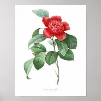 HIGHEST QUALITY Botanical print of Camellia