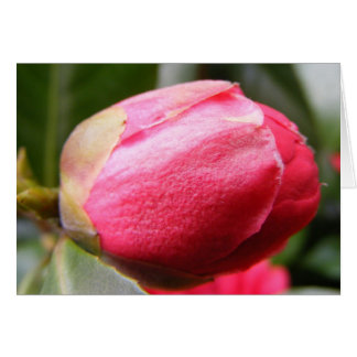 Highgate rose stationery note card