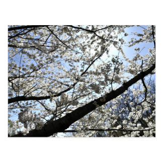 Highland blossoms postcard