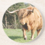highland-cattle-3645 posavasos para bebidas