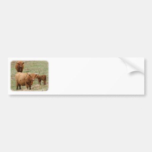 Highland Cattle 9Y316D-017 Bumper Sticker