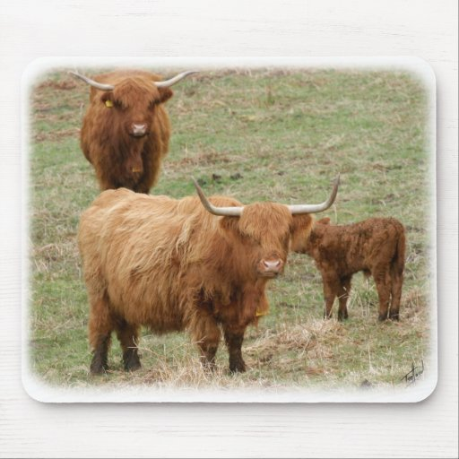 Highland Cattle 9Y316D-017 Mouse Pad