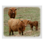 Highland Cattle 9Y316D-017 Posters