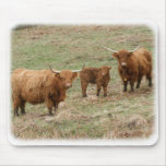 Highland Cattle 9Y316D-030 Mouse Pads