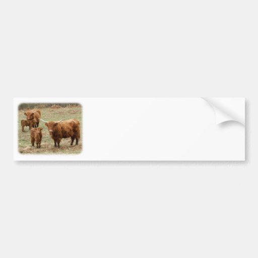 Highland Cattle 9Y316D-055 Bumper Stickers