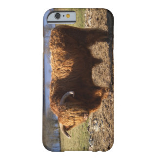 Highland Cattle Bull, Scotland Barely There iPhone 6 Case