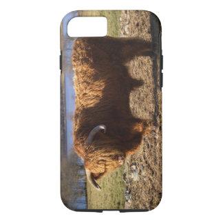 Highland Cattle Bull, Scotland iPhone 7 Case