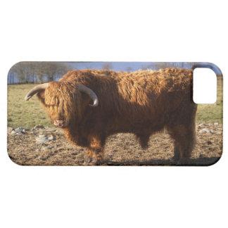 Highland Cattle Bull, Scotland iPhone SE/5/5s Case