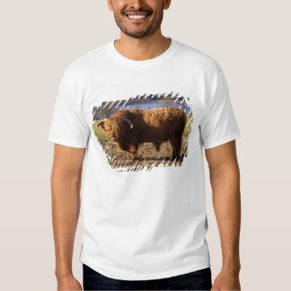 Highland Cattle Bull, Scotland Tee Shirt