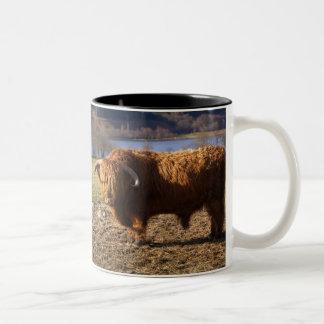 Highland Cattle Bull, Scotland Two-Tone Coffee Mug