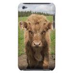 Highland Cattle calf, near Dufftown, iPod Touch Case-Mate Case