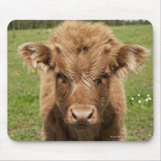 Highland Cattle calf, near Dufftown, Mouse Pad