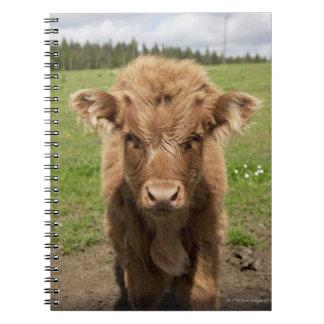 Highland Cattle calf, near Dufftown, Spiral Notebook