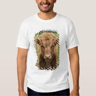Highland Cattle calf, near Dufftown, T-shirt