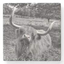 Highland Cattle Coaster