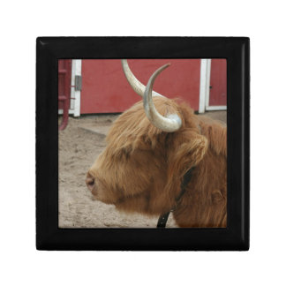 Highland Cattle Cow Gift Box