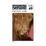 Highland Cattle Cow Postage Stamp